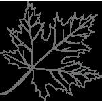 disegno-acero-del-canada